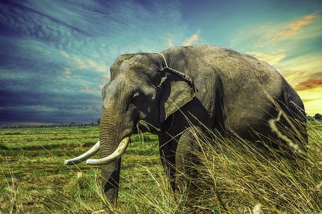 slon v přírodě