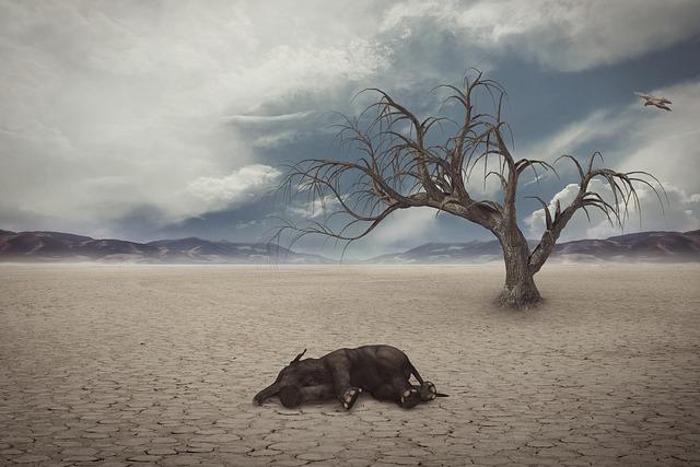slon na poušti.jpg