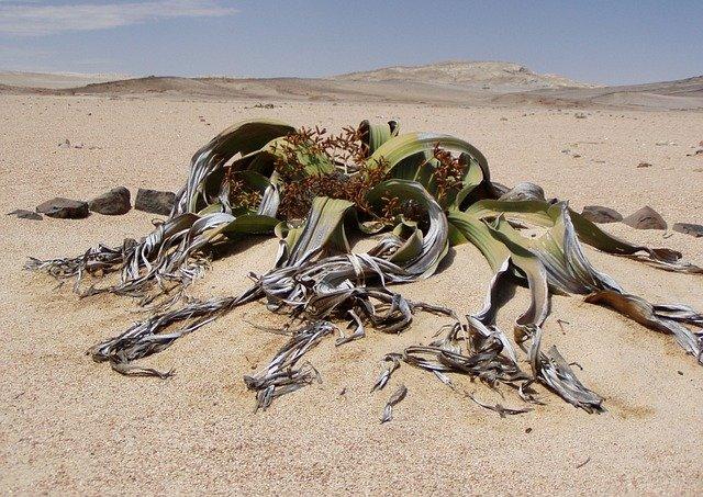 rostlina na poušti