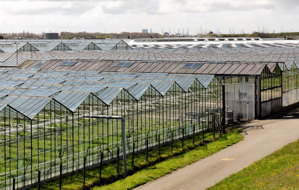 obří skleníky