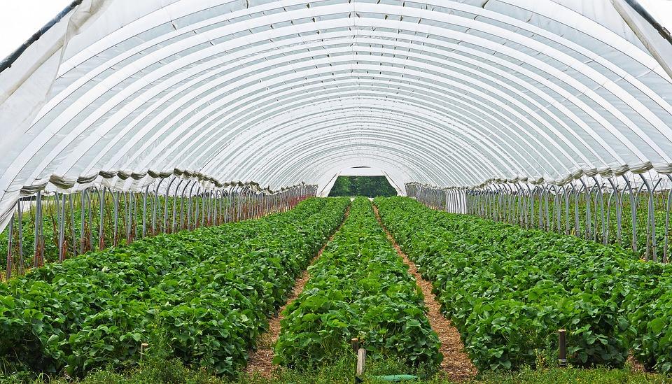 pěstování rostlin ve skleníku
